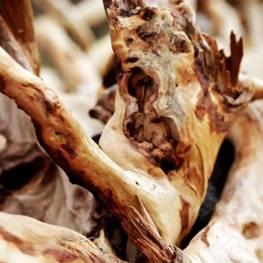 древесина Сандала